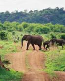 elephants_1_1.jpg