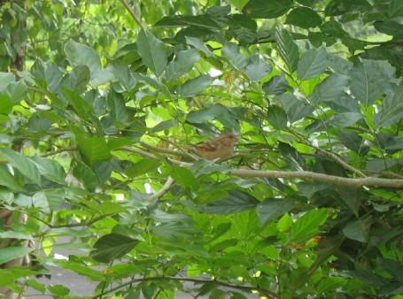 sparrow5_1_1.jpg